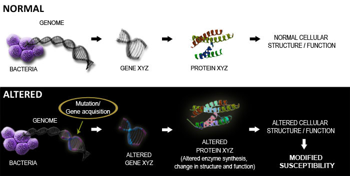 normal-vs-altered protein synthesis